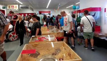 Museumsbesucher beim Stadionfest 2018